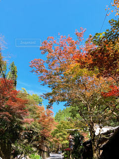 秋の風景の写真・画像素材[2712622]