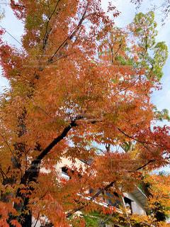 秋の京都の写真・画像素材[2713752]