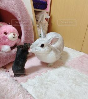 ウサギとハムスターの写真・画像素材[3305711]
