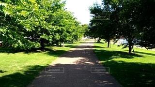 公園の木の写真・画像素材[2719421]