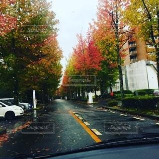 雨と紅葉の写真・画像素材[2719059]