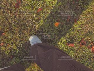 季節外れのたんぽぽの写真・画像素材[2714872]
