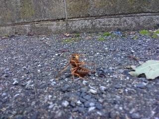 ハチの休憩の写真・画像素材[2715636]