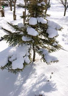 雪の積もった木の写真・画像素材[2768552]