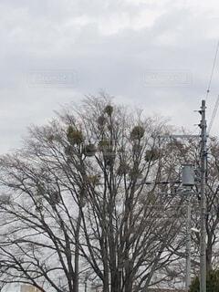 巣のある木の写真・画像素材[4368898]