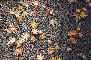 落ち葉の写真・画像素材[2746397]