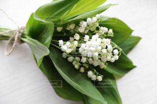 すずらんの花束の写真・画像素材[3148324]