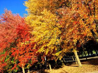 秋の写真・画像素材[2726216]