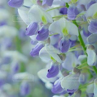 自然の写真・画像素材[112252]