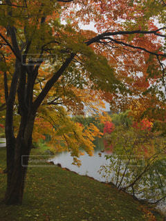 公園の池と紅葉の写真・画像素材[253874]