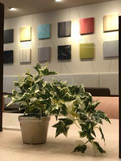 テーブルの上の観葉植物の写真・画像素材[1549939]