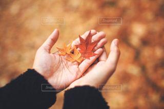紅葉を持つ手元の写真・画像素材[2810533]