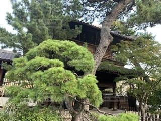 大きな木の写真・画像素材[2727549]