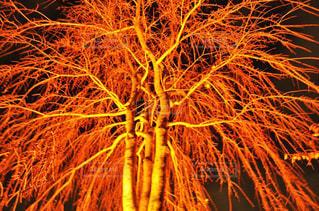 ライトアップの写真・画像素材[2919456]