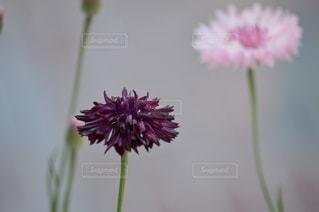 花をクローズアップするの写真・画像素材[2728230]