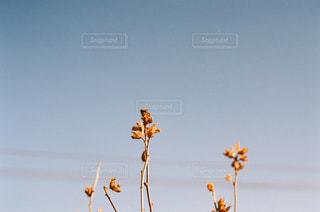近くの花のアップの写真・画像素材[1877170]
