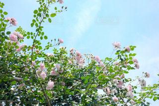 空の写真・画像素材[123352]