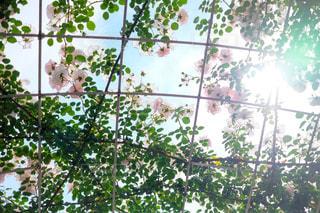 花の写真・画像素材[149872]