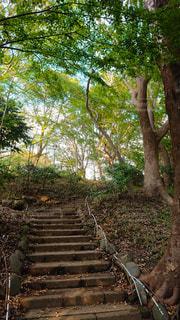 公園の木々と階段の写真・画像素材[2729658]