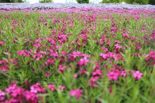 咲き誇る花々の写真・画像素材[2772020]