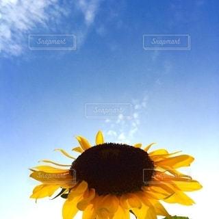 黄色い花の写真・画像素材[2730403]