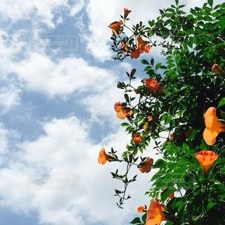 色とりどりの花の群の写真・画像素材[2730404]