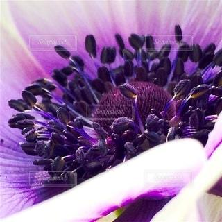 紫色の花の束をクローズアップするの写真・画像素材[2730694]