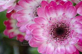花をクローズアップするの写真・画像素材[2872213]