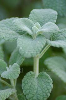 植物のクローズアップの写真・画像素材[2872215]