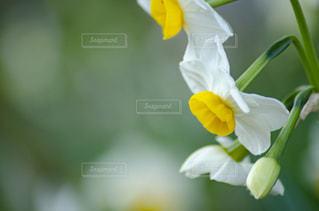 植物の上の白い花の写真・画像素材[2872221]