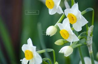黄色い花の上に座っている花の花瓶の写真・画像素材[2872219]