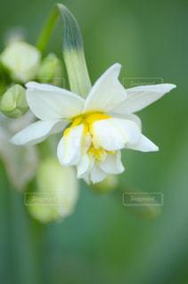 花をクローズアップするの写真・画像素材[2872222]