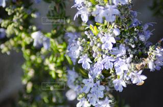 花をクローズアップするの写真・画像素材[2872239]