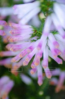 花をクローズアップするの写真・画像素材[2872252]