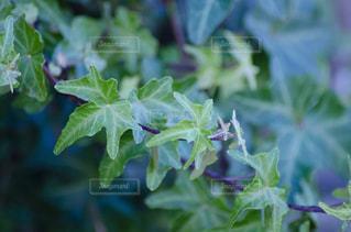 緑の植物のクローズアップの写真・画像素材[2872271]
