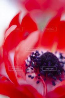 花をクローズアップするの写真・画像素材[2872327]