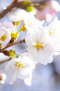 花をクローズアップするの写真・画像素材[2872341]