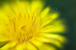 花をクローズアップするの写真・画像素材[2872355]