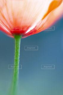 花をクローズアップするの写真・画像素材[2872356]
