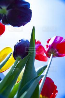 色とりどりの花の群の写真・画像素材[2872362]