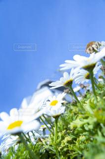 花をクローズアップするの写真・画像素材[2872360]