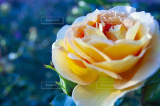 花をクローズアップするの写真・画像素材[2872361]