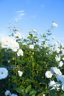 花畑のクローズアップの写真・画像素材[2872363]