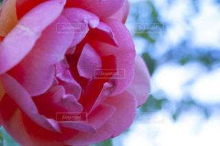 花をクローズアップするの写真・画像素材[2872368]