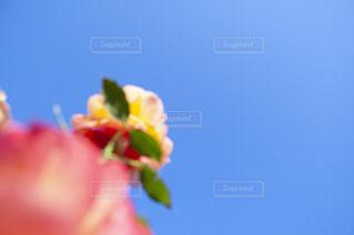 花をクローズアップするの写真・画像素材[2872367]