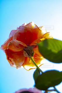花をクローズアップするの写真・画像素材[2872366]