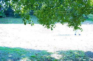 庭のクローズアップ 公園の写真・画像素材[2872400]