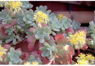 花をクローズアップするの写真・画像素材[2872398]