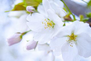 花をクローズアップするの写真・画像素材[2872402]