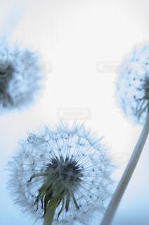 花をクローズアップするの写真・画像素材[2872412]